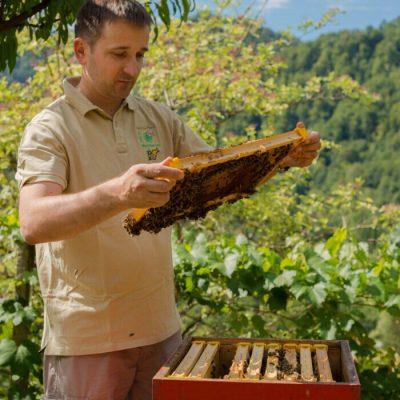 Peter kozmus ob pregledu čebel2